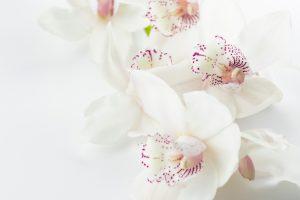 fleur-de-lys